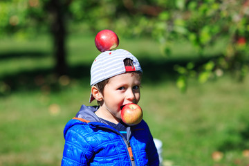Very cute boy has fun in apple orchard, during harvest period. Happy child picking apples on a farm in autumn. Little kid playing with apples in tree orchard. Conceptual picture for organic fruits.