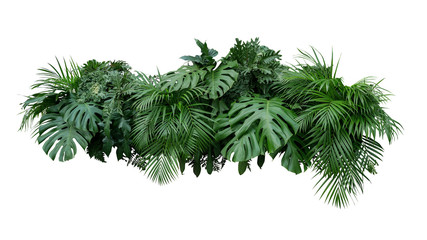 Tropical leaves foliage plant jungle bush floral arrangement nature backdrop isolated on white background, clipping path included.