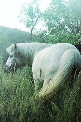 Small white pony with magic landscape