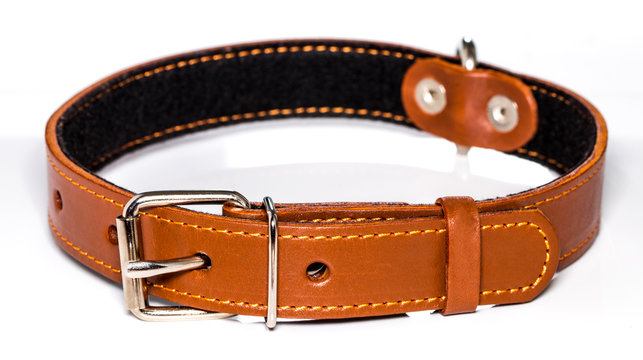 leather dog-collar isolated over the white background, side view