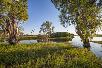 Peaceful landscape at sunrise in White water Billabong, Kakadu National Park, Northern Territory, Australia
