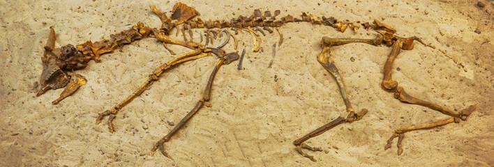 Animal skeleton on the sand. Background
