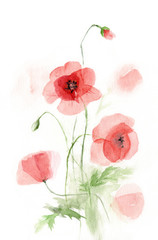 watercolor picture transparent poppies. sketch
