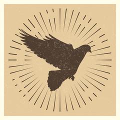 Dove vintage vector pigeon