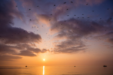 Sunset on the ocean with a huge flock of birds flying over head against colorful clouds.