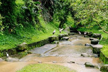 Kuala Lumpur Bird Park in Malaysia