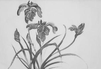 monochrome iris flowers