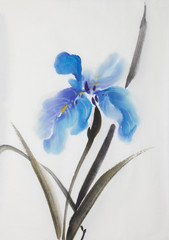 gently blue iris flower