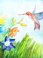 Hummingbird flies to flowers to collect nectar. Watercolor on paper. Copy space