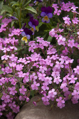 Pink flowers and violets over a stone