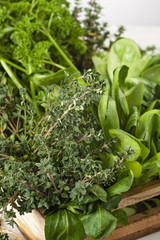 Variety of fresh green organic herbs. Healty eating concept