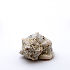 shell isolated in the studio