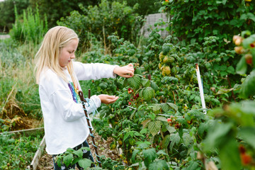 Female preteen child picking soft fruit