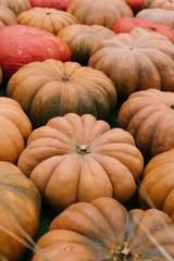 Many orange pumpkins on the farmers market in the Halloween season