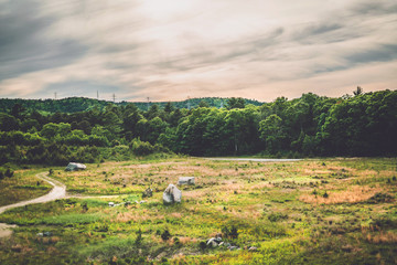 Open field of grass and rocks surrounded by lush green trees