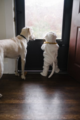 Toddler standing with dog wearing matching costume
