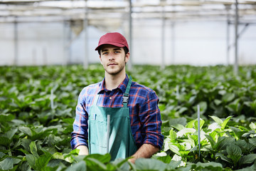 Confident Florist Standing Amidst Hydrangea Plants In Greenhouse