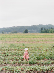 toddler picking strawberries at a farm