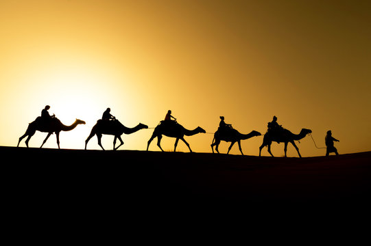 Berber and camels walking through the dunes on a sunset