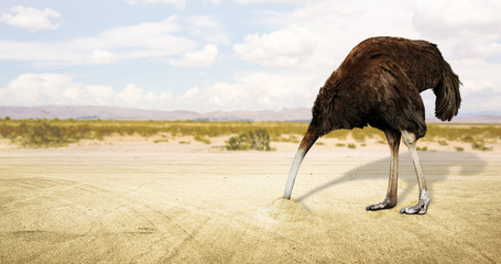 Illustration of an ostrich hiding his head in the sand in the desert . 3D rendering.