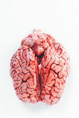 Close up of a brain
