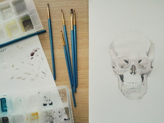 Skull watercolor in progress