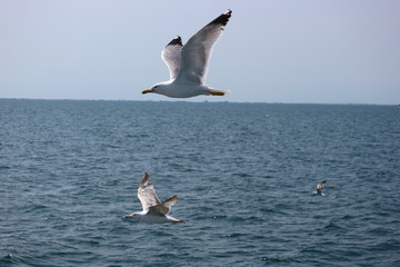 Seagull over the Mediterranean sea