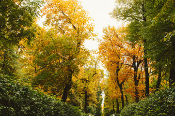 Trees changing color to yellow and orange