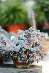 Fotomurales - Succulents in pot on table. Concept of plants.