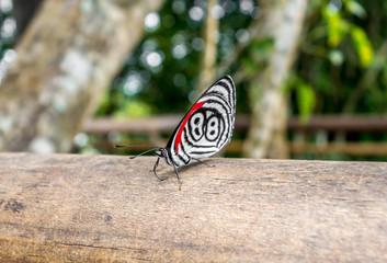 butterfly at iguazu falls