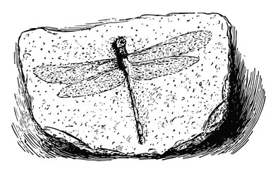 dragonfly fossil #vector #isolated - Libelle Fossil in Stein