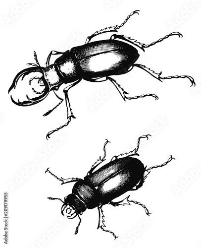 stag beetle lucanus cervus vector isolated hirschk fer stock Rhino Beetle stag beetle lucanus cervus vector isolated hirschk fer