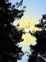иллюстрация черного контура деревьев на белом фоне и желтого солнца и голубого неба