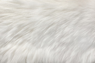white natural fur background Wall mural