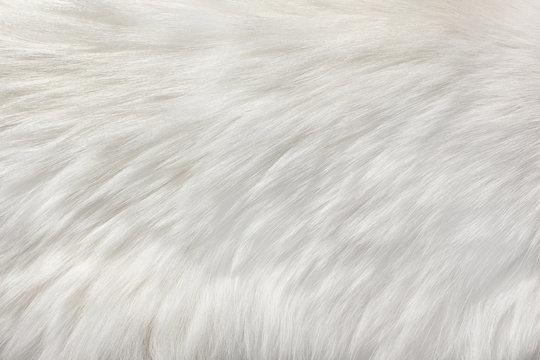 white natural fur background