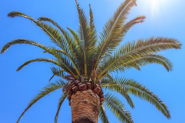 Green palm tree on blue sky background, tropical summer concept