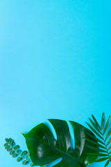 Ggreen palm and Monstera leaf branches on blue background. flat lay, top view