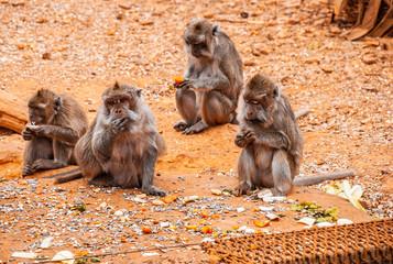Baboon, safari park, mallorca