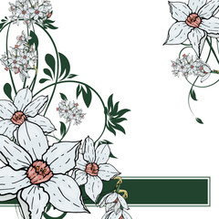 Vector hand drawing  Narcissus flowers background