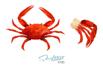 Crab and meat crab vector illustration in cartoon style isolated on white background. Seafood product design. Inhabitant wildlife of underwater world. Edible sea food. Vector illustration
