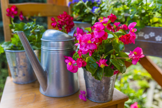 Begonias and flower decorations in pots on the terrace.