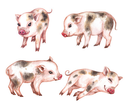 Watercolor Set of Micro Pigs