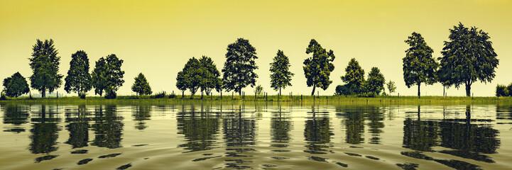 trees at the lake