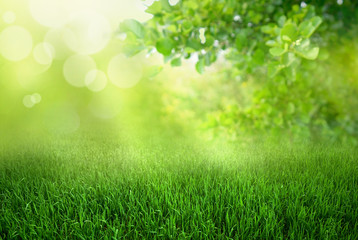 Natural green defocused spring summer blurred background with sunshine. Juicy young grass and foliage on nature in rays of sunlight, copy space.