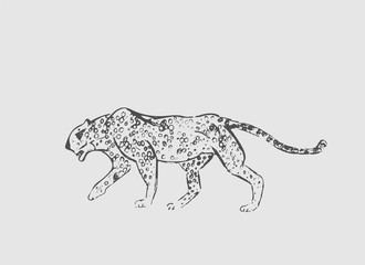 Cheetah. Hand drawn ink sketch. Horizontal drawing. Vector engraving. Predator line art. Black line illustration isolated on light gray background.
