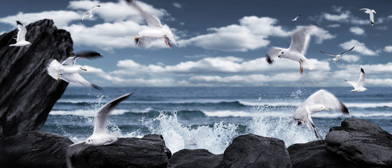 empty fairytale sea view background with seagulls, waves and rocks