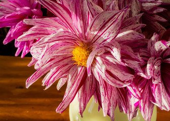 Close up of a red and white cactus dahlia in a buquet of cut flowers.