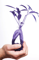 Hands holding bonsai plant. Ultra violet color
