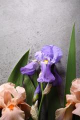 Natural iris flowers background