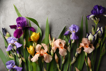 Colorful iris flowers background